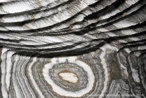 Varie sfumature di grigio, ancora più distinguibili, in questo particolare del rosone