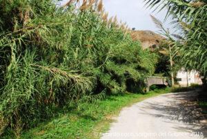 L'acqua è vicina. La vegetazione è lussureggiante e le canne crescono rigogliose tutt'attorno alle sorgenti Gabriele anche perché il sito, gestito dall'AMAP, è ben curato.