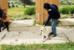 """Questo cane pronto a farsi coccolare dai turisti lo abbiamo trovato dentro il """"tempio E""""."""