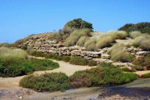 Ruderi della cinta muraria, lunga circa 2,5 km che racchiude tutta l'isola ed è fondata sul banco in calcare tenero che si alza appena per pochi metri sulla stretta spiaggia.