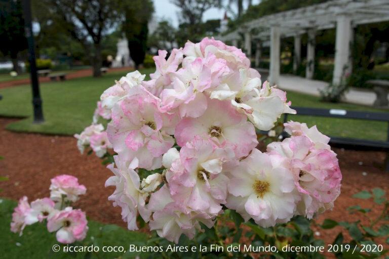 """Il Rosedal de Palermo, chiamato anche """"Paseo del Rosedal"""", è un parco tradizionale situato nel Barrio Palermo. È stato dichiarato Patrimonio Culturale della Città di Buenos Aires."""