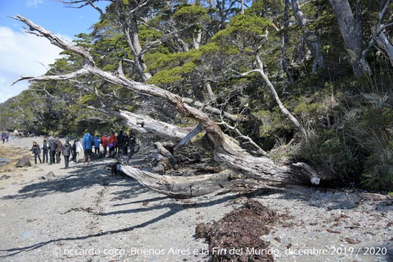 Diretti al ghiacciaio Aguila passeggiando lungo la riva della laguna formatasi con lo scioglimento del ghiaccio e la foresta pluviale