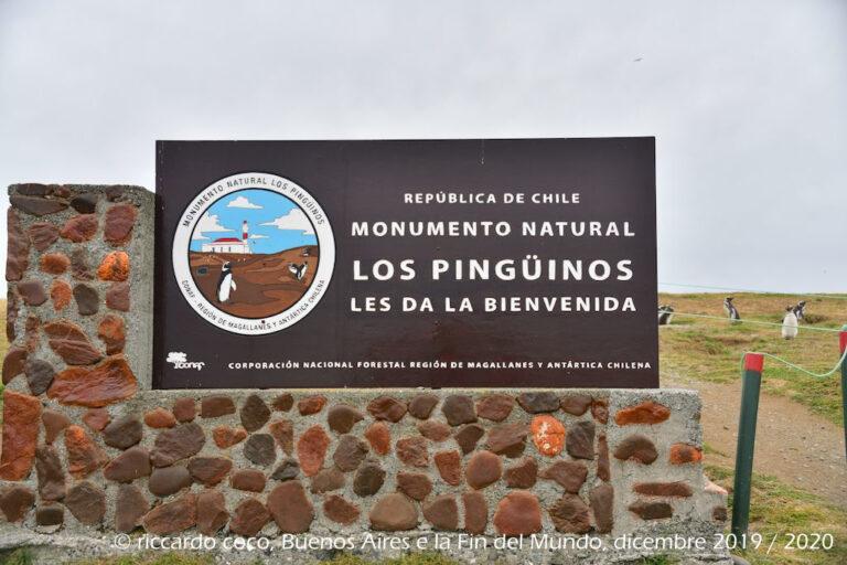 Sbarco sull'Isola Magdalena(Cile), nello Stretto di Magellano. L'isola ospita un'immensa colonia di pinguini magellanici, che si possono ammirare durante il cammino verso il faro. Insieme ai pinguini tanti gabbiani.