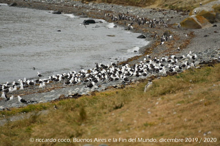 I gabbiani dell'isola Magdalena